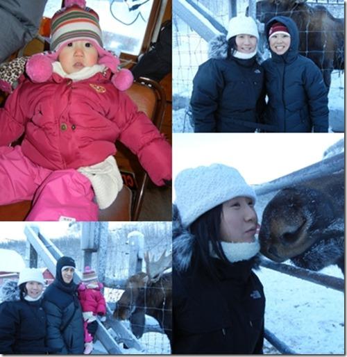 reindeerfarm
